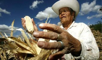 This Crowdfunding Campaign Hopes to Save 50 Small Family Farms in Mexico