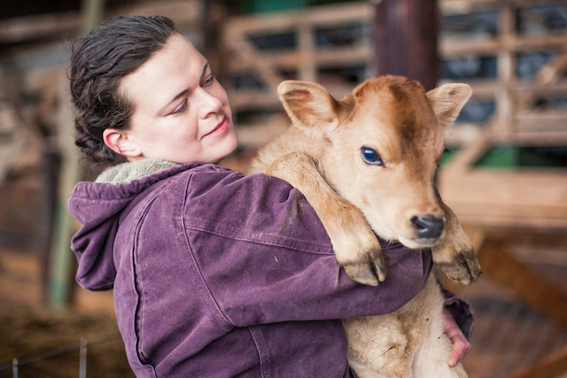 Caring for the Cattle - Oxbow Farm