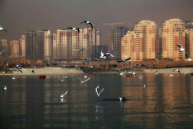 Seabirds at persian gulf lake_Photo by Amir Golipour