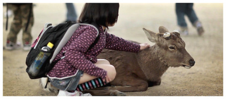Japanese School Girl Fondles a Sika Deer in Nara