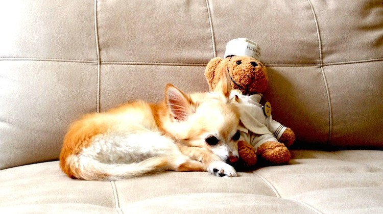 Dolce with bear