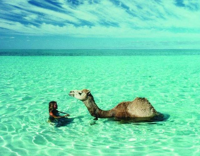 The Art of Travel (With a Camel or Two)