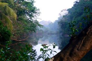 kerala bird sanctuary in morning-1