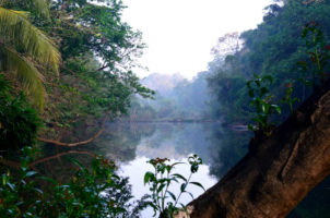 kerala bird sanctuary in morning-1