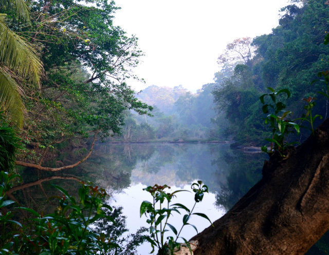 Without Footprints: A Sustainable Journey Through Kerala