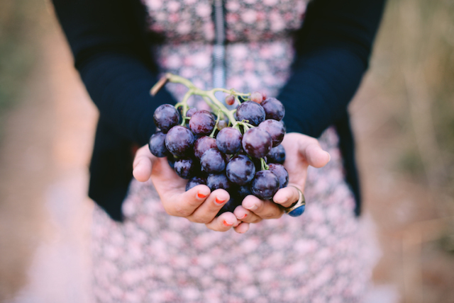 organic vineyard tuscany