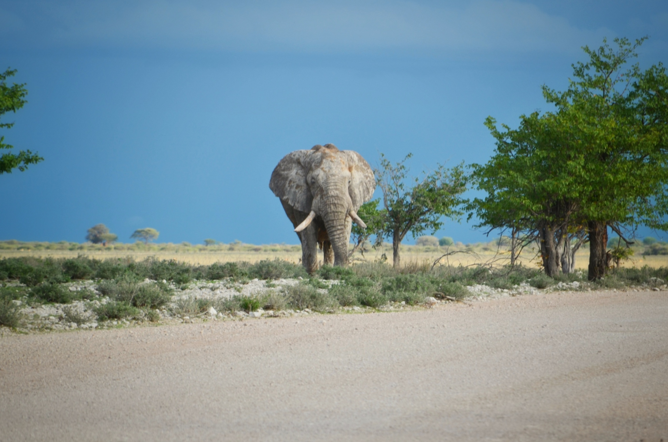 etosha essay Etosha cosystem that contains many interacting species of organisms and their physical environment as the seasons change, the temperature and climate affect the biotic and abiotic factors.