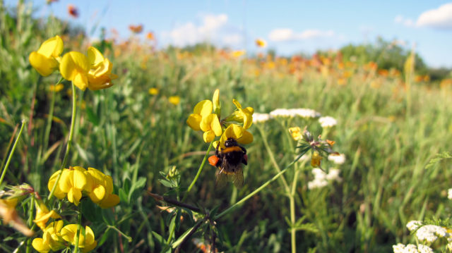 "Find Out How This ""Seedle"" Can Turn a Dead Landscape Into a Wildflower Haven for Bees"