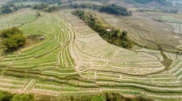 Rice Fields Laos