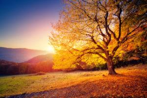 The Autumn Process: Letting Negativity Fall Away