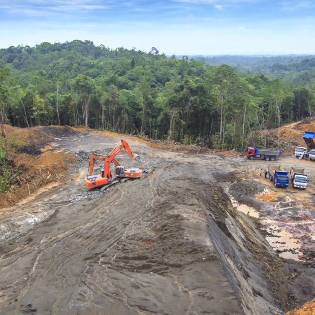 Sustainability and Palm Oil: How the Two Are Far From Hand in Hand