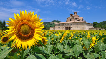 Marche: Italy's Hidden Region Waiting to be Explored