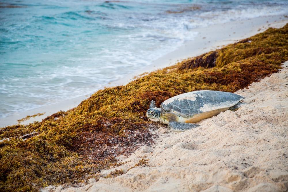 Sea_Turtle_On_Beach