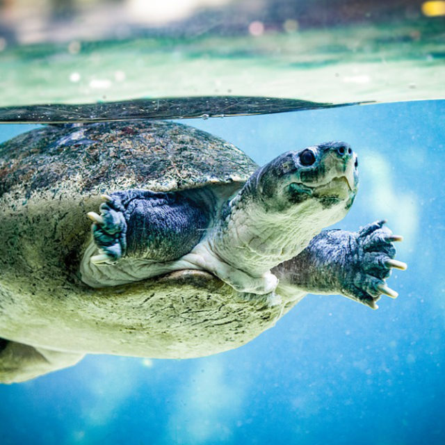 Turtle Preservation in Mexico