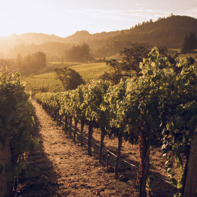 A Farm-to-Table Food Guide to Napa Valley