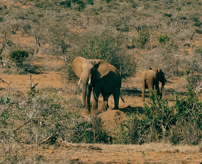 safari-81