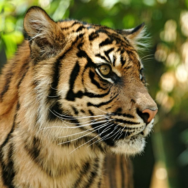 3 Organizations Helping to Save Wild Cats From Vanishing