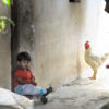 boy with chicken Guatemala