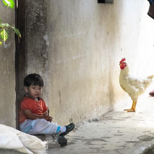 boy with chicken Guatemala