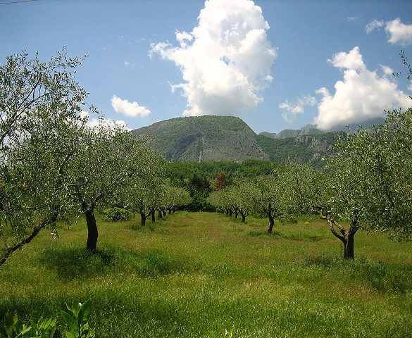 tre olive - olive oil calabria italy