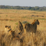 Condé Nast Traveler Ranks Phinda Private Game Reserve Third on 'Top 100' List