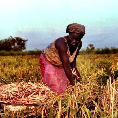 Women Farmer Africa