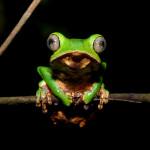 Worldwide Crowdfunding Initiative Pays Ecuador $116m to Save Rainforest