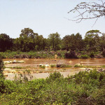 Floods Continue to Devastate Mozambique as South Africa's Kruger National Park Recovers (VIDEO)
