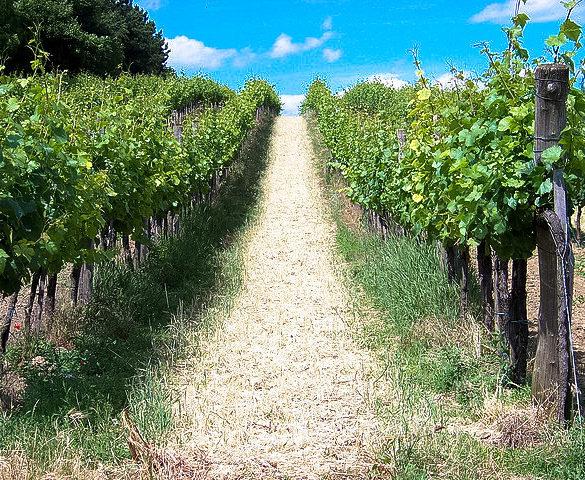 Rocker Dave Matthews' Sustainable Winery