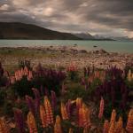 Travel Iceland