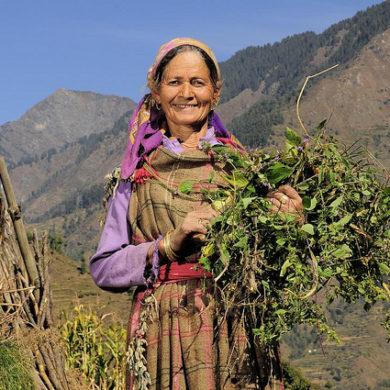 Farmer near Himachal Pradesh, India