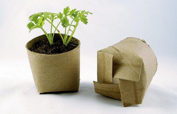 Seedling - Earth Day Tips