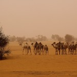 camels healthcare africa