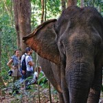 At the Elephant Valley Project, Cambodia's Gentle Giants are Given a Second Chance