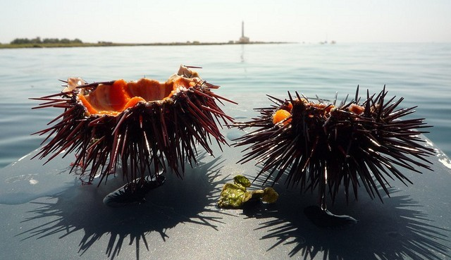 Puglia Sea Urchin - Italy