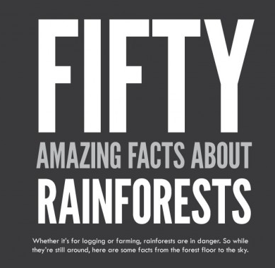 fifty interesting facts about rainforests