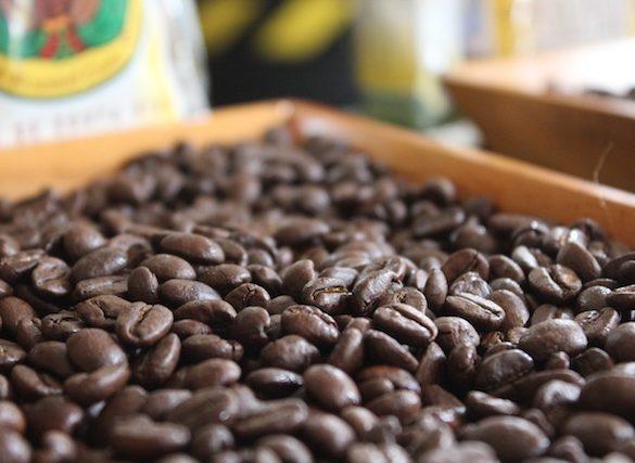 Fresh Coffee at Doka Coffee Estate Central Valley, Costa Rica