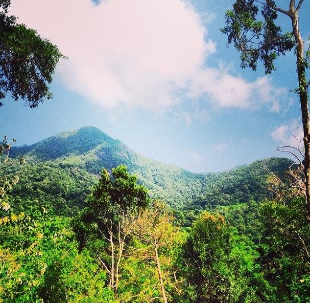 ko chang jungle