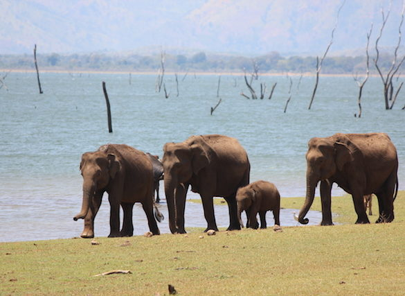 elephant safari uda walawe sri lanka