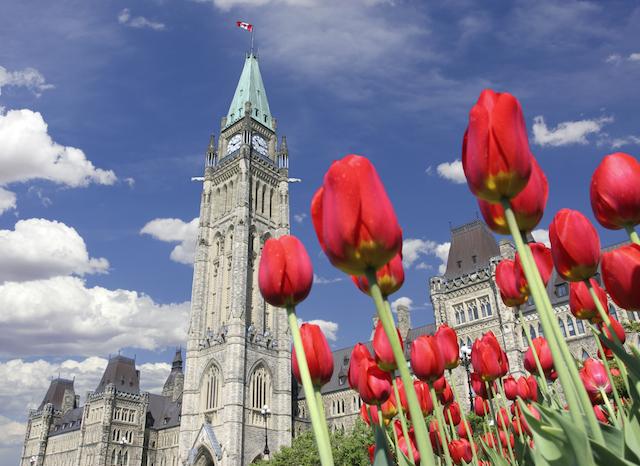 tulip festival, Ontario