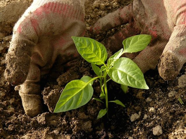 vegetable gardening app
