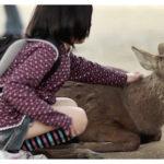 Japanese School Girl Fondles a Sika Deer in Nara