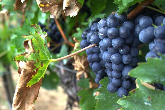 amalfi coast wine