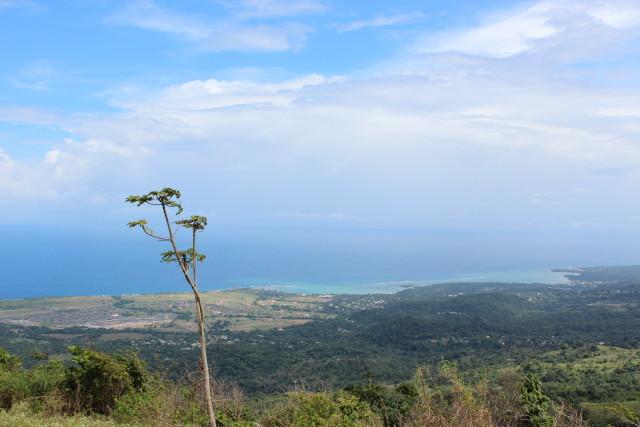 free hill jamaica