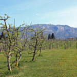 Top 5 Organic Canadian Wineries