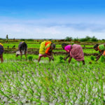 """Worldwatch Institute's """"Nourishing the Planet Project"""" Finds Innovative Agricultural Methods"""