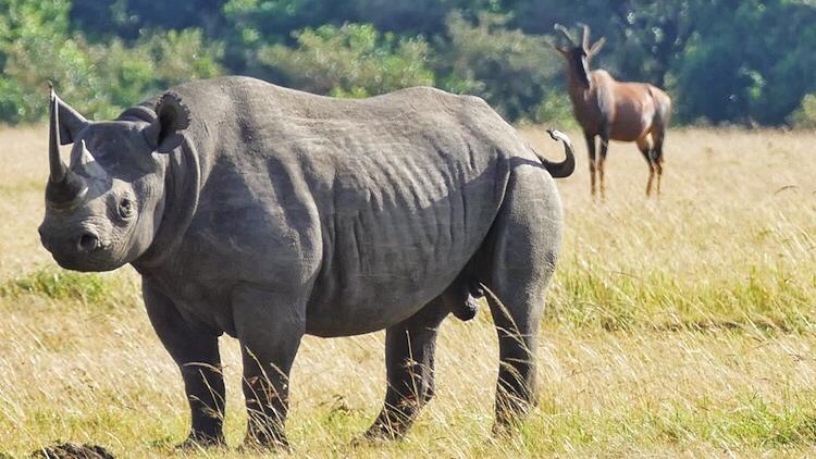 rhino final
