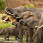 On This World Elephant Day Let's Come Together to Protect, Respect and Honor Elephants