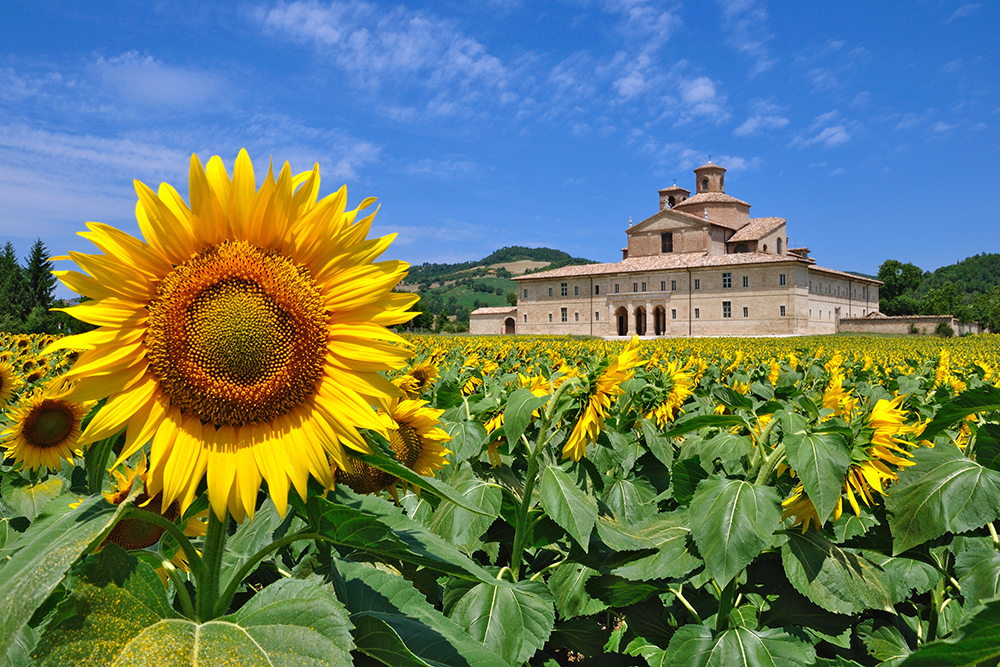 Le-Marche-Countryside-With-Sunflower