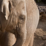 5 Reasons You Shouldn't Ride Elephants in Southeast Asia